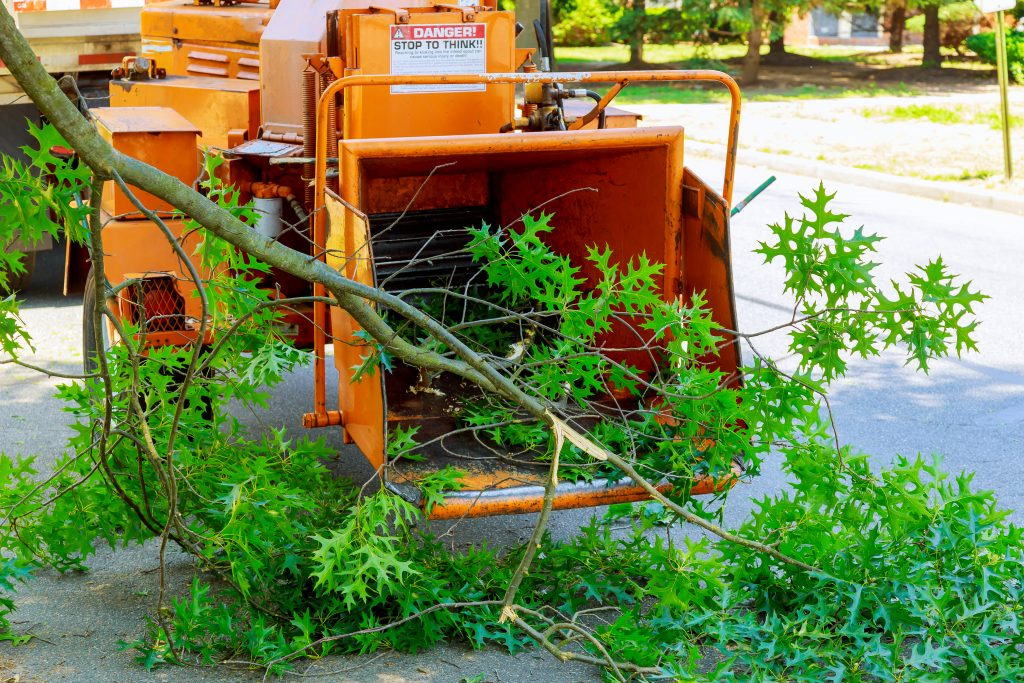 tree removal services plano