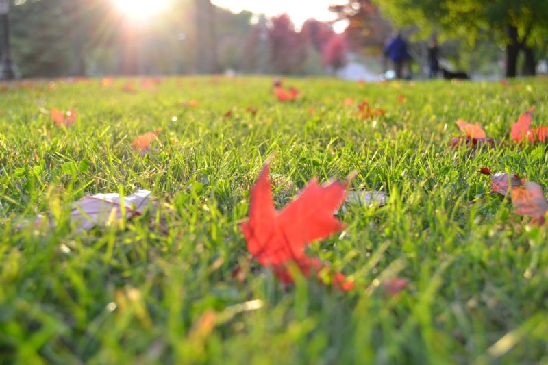 fall lawn care services