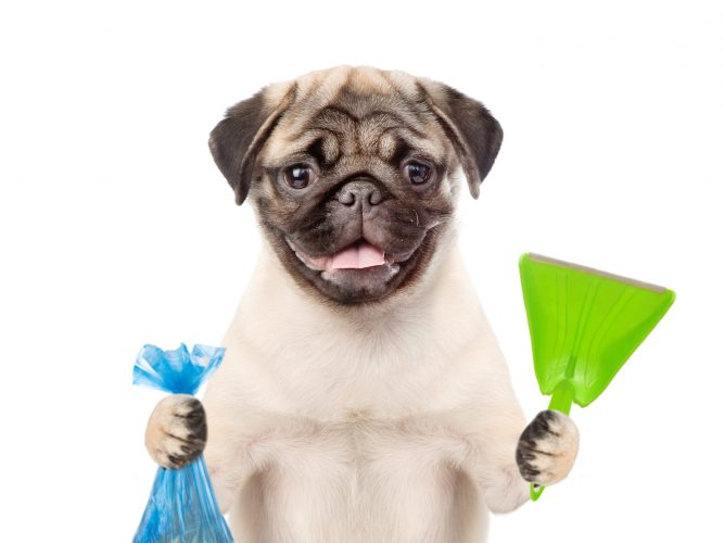 pet-waste-cleanup