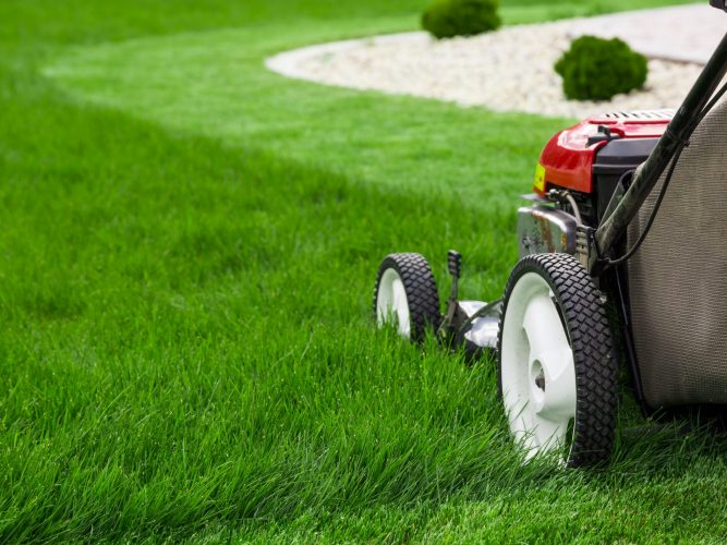 Lawn Care Maintenanace